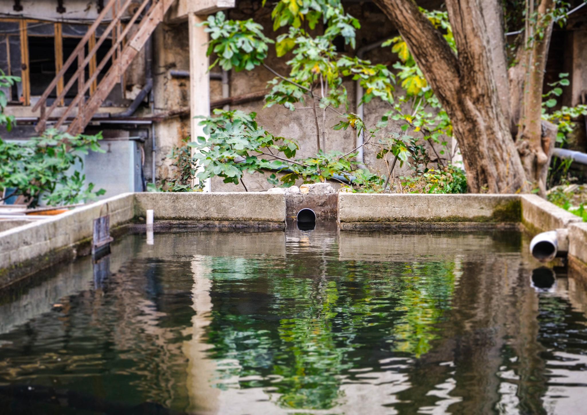 Décors bassin